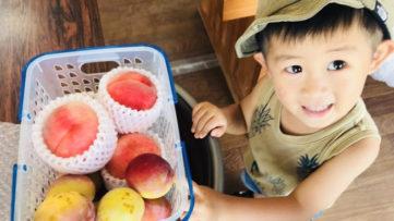 【桃・スモモ】ジューシーな旬の果物で夏を乗り切ろう!