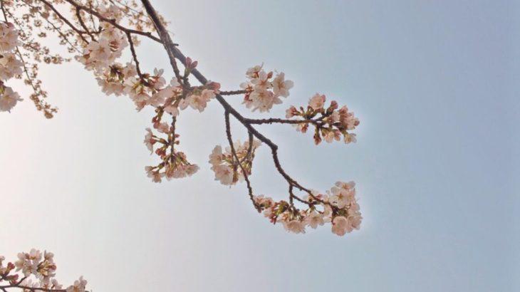 【ビブリオ推薦】桜が出てくる小説14選♪