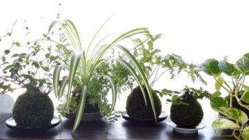 土と緑のある暮らしを提案!苔玉の店「Soli for life」