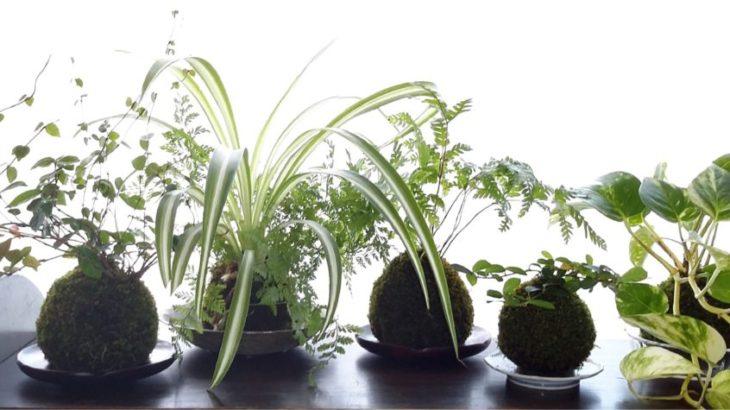 土と緑のある暮らしを提案!苔玉の店「Soil for life」