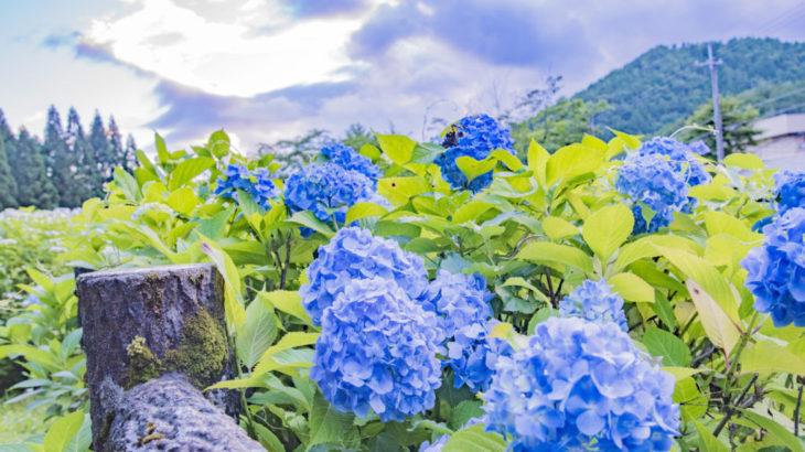 【カメラ女子】丹波おすすめスポット2選!紫陽花めぐりツアー