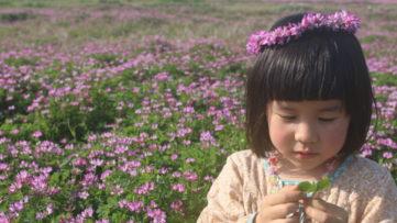 【花めぐり】満喫しすぎか!野上野れんげ畑