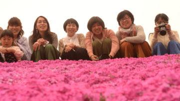 【圧巻花見スポット】丹波市春日町で芝桜ピクニック