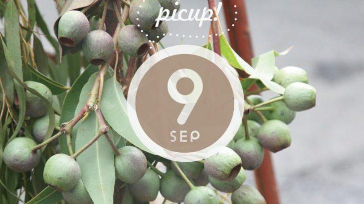 #丹波ハピネスマーケット Instagramでご紹介♪【9/14】