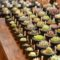 ★9月9日出店者紹介★【雑貨】Succulents HITOTUKI